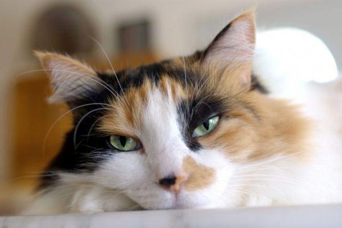Nếu mơ thấy mèo chết thì đó là điềm báo không tốt đối với chủ nhân