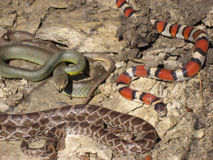Mơ thấy rắn đã khiến nhiều người hoảng sợ