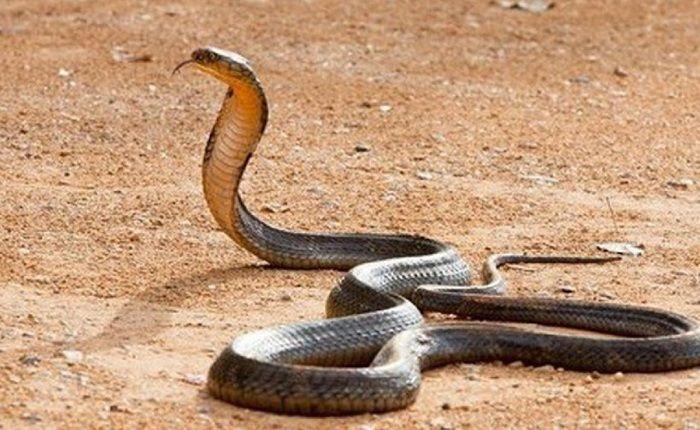 Theo quan niệm về tôn giáo của nhiều quốc gia thì rắn chính là linh vật thiêng liêng