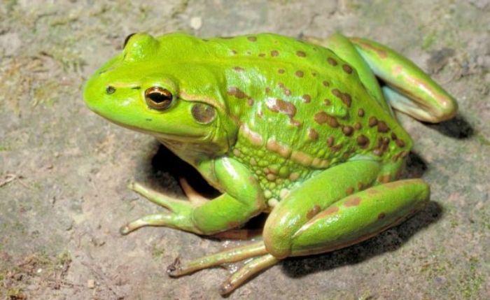 giấc mơ thấy con ếch mang đến điềm báo gì?