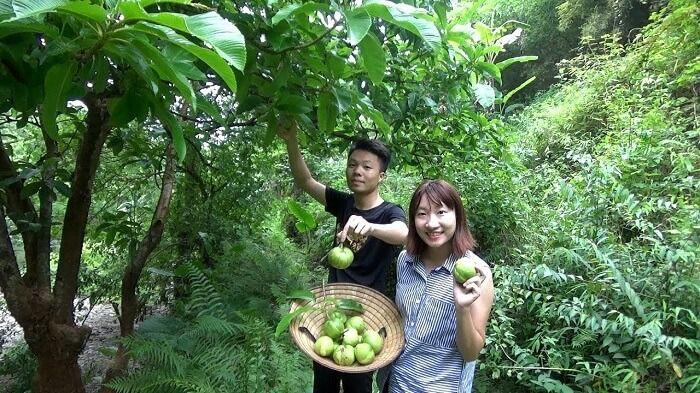Nhờ việc hái trái cây ngày càng phổ biến mà nằm mơ thấy hái trái cây cũng rất thường gặp