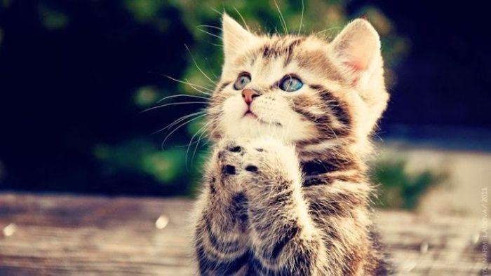 Mèo vào nhà là giấc mơ không phải ai cũng gặp nhưng khi đã gặp thì bạn nên lưu ý