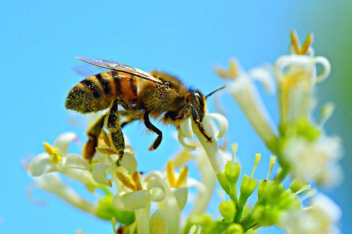 Mơ thấy ong là giấc mơ nhẹ nhàng và không khiến con người lo lắng