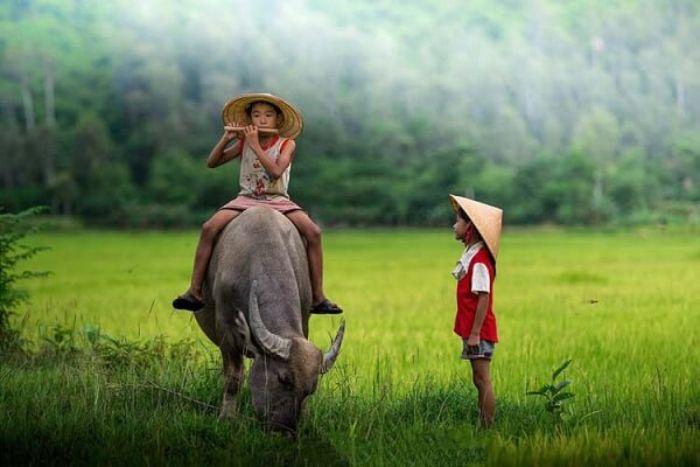 Nhắc đến trâu người ta sẽ nghĩ ngay đến con vật hiền lành, gần gũi với người nông dân