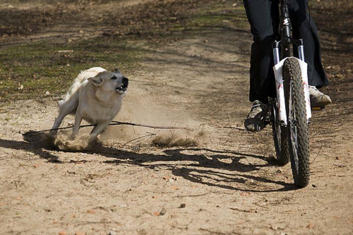 Khi xuất hiện hình ảnh chó đuổi trong chiêm bao, hẳn nhiều người sẽ cảm thấy hoang mang và hoảng sợ