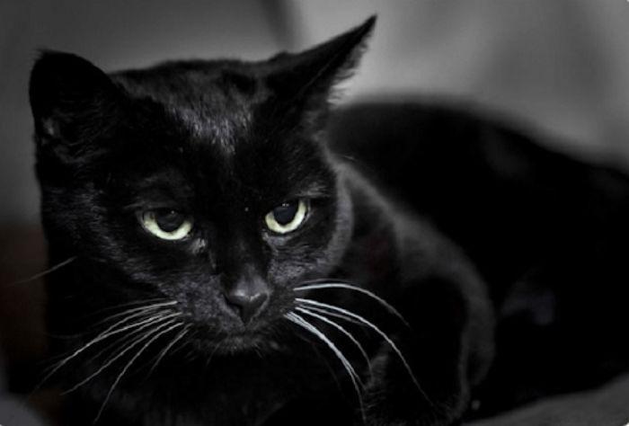 Đa phần những giấc mộng liên quan đến mèo đen đều ẩn giấu một bí mật nào đó