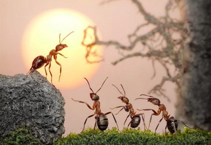 Kiến là loài vật tượng trưng cho sự chăm chỉ, cần cù, siêng năng, tinh thần đoàn kết